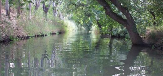 fonte-fiume-ciane-siracusa