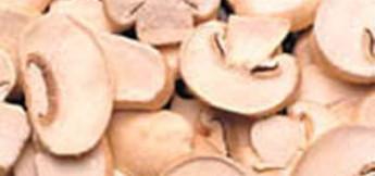 Mostra e sagra dei funghi ad Ucria