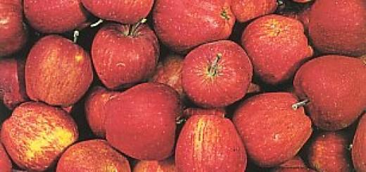 Sagra delle mele dell'Etna 2011