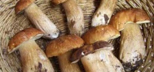 Sagra del fungo a Zafferana Etnea