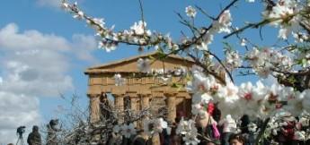 Sagra del mandorlo in fiore di Agrigento - da tr98.it