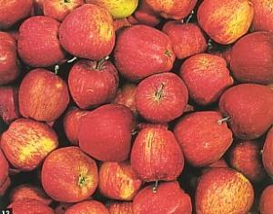 Sagra delle mele dell'Etna 2012, Ottobrata Zafferanese