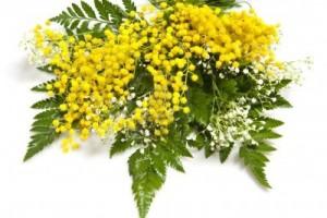 immagine di mimose da http://it.123rf.com/photo_9030381_fiori-per-la-celebrazione-della-festa-della-mamma-e-delle-donne.html